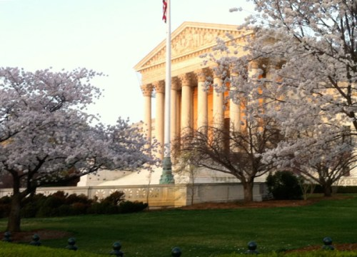 Cherry trees in bloom around the Supreme Court last year