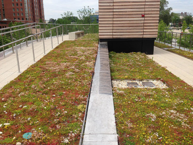 The Park Tavern sports a green roof that reminds me of the High Line in NYC (and the book The Curious Garden)