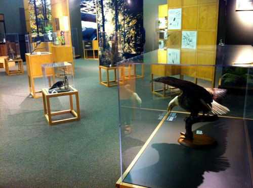 Animal exhibits at the Rock Creek Nature Center