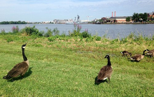 Enjoy views of the Navy Yard and wildlife sightings