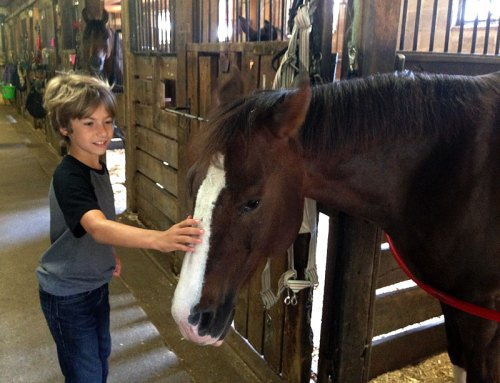 Visit the stables at the Rock Creek Horse Center