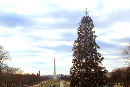 The view from the Capitol Christmas tree