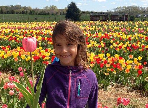Tulips galore at Burnside Farms