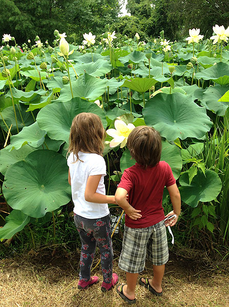 Stop and see the flowers at Kenilworth Aquatic Gardens