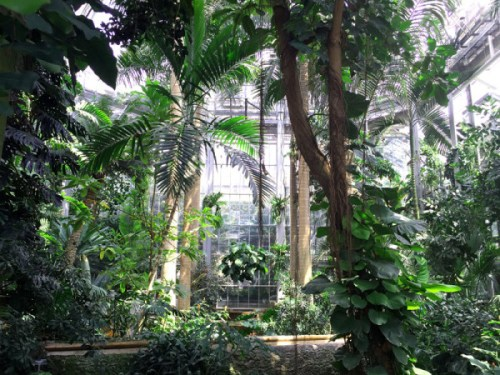 It's a jungle in there at the U.S. Botanic Garden