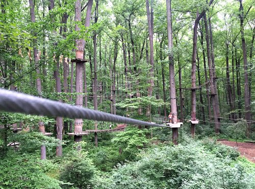 Play in the trees at the Adventure Park at Sandy Spring