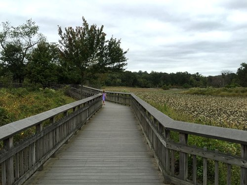 View the marsh from the boardwalk