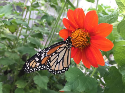 The butterflies are back at Brookside Gardens!
