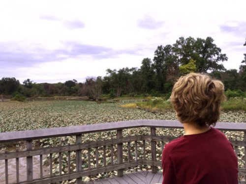 Taking in the view at Kenilworth Aquatic Garden