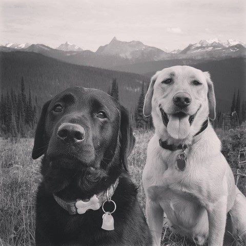 Baxter and Mac - Becca's trail runnign posse