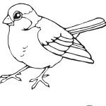 print out Sparrow bird pages to color