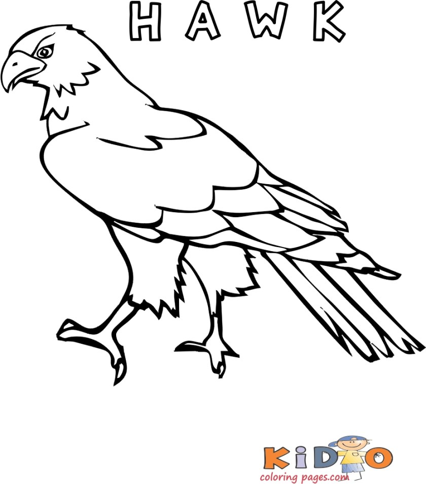hawk bird pages for colouring for kids