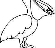 Pelican coloring in page for kids