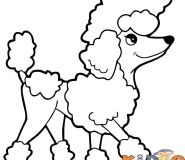 simple dog drawing poodle color pages to print