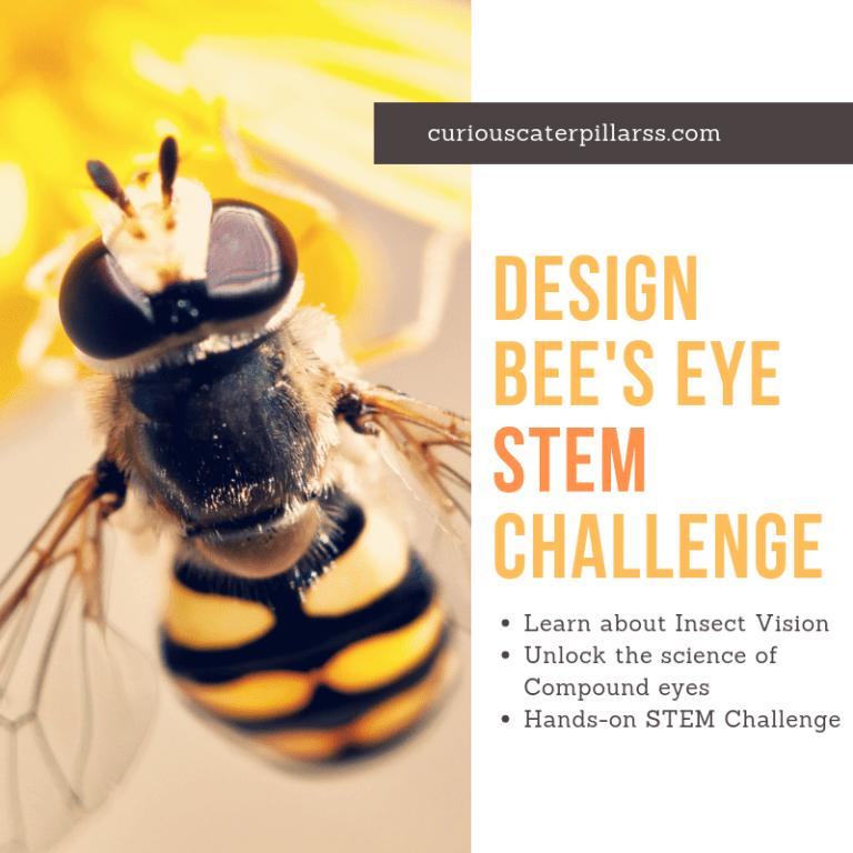 Compound Eyes STEM challenge