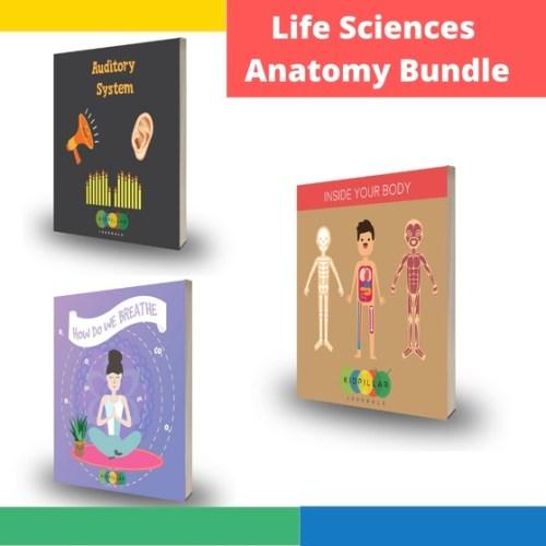 Human body activities for kids