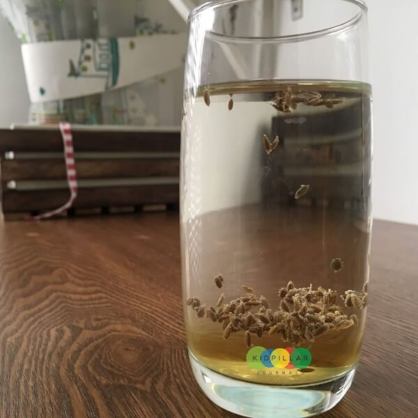 floating seeds science experiment for kids