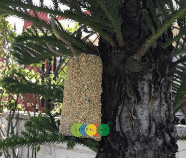 easy bird feeder for kids