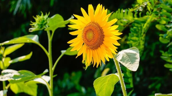 Flowers to Plant with Kids in home garden