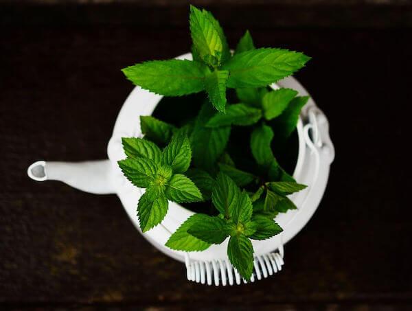 Herbs to grow with kids