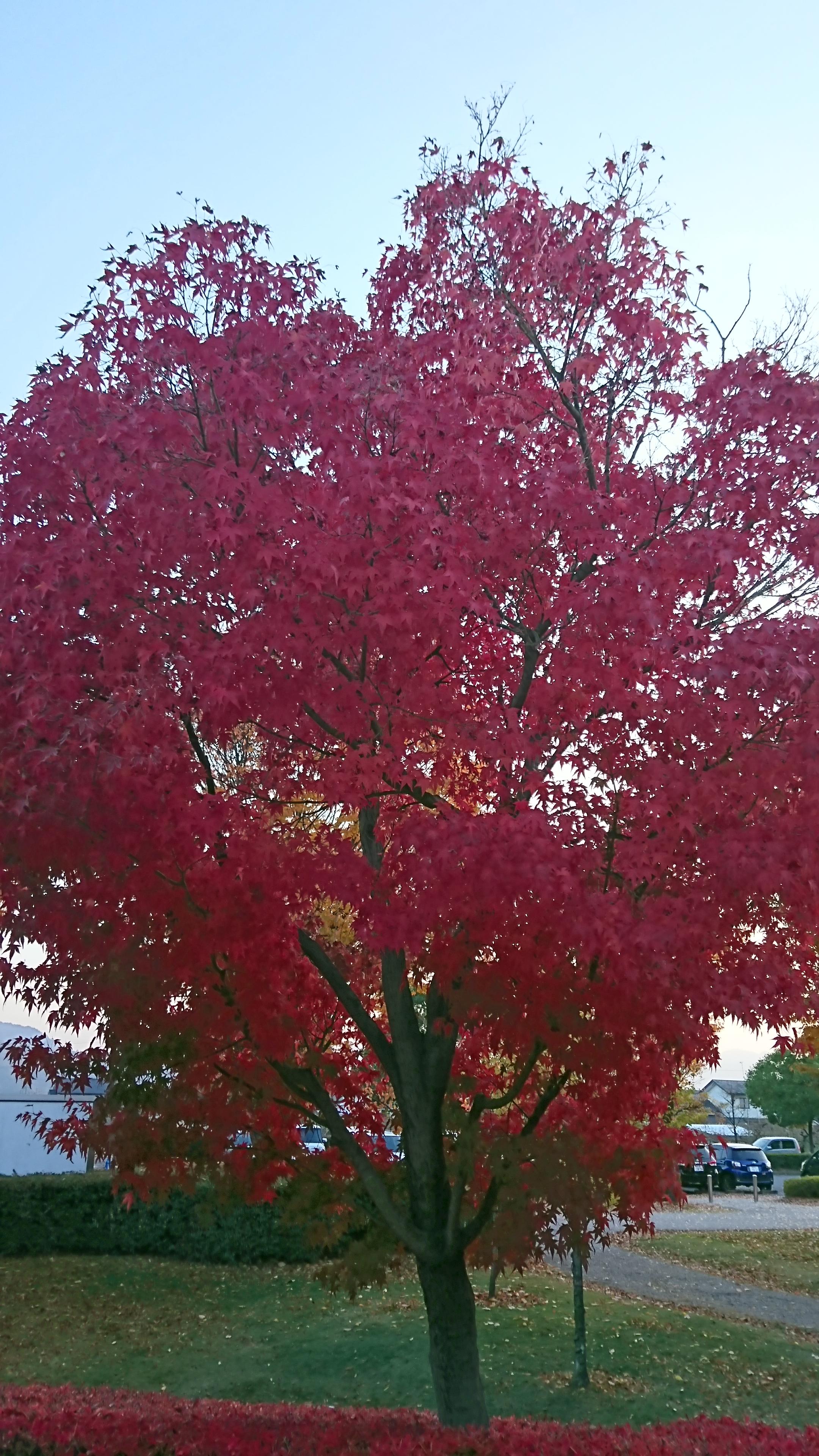 【キッズまゆ】 紅葉がきれいですね!!