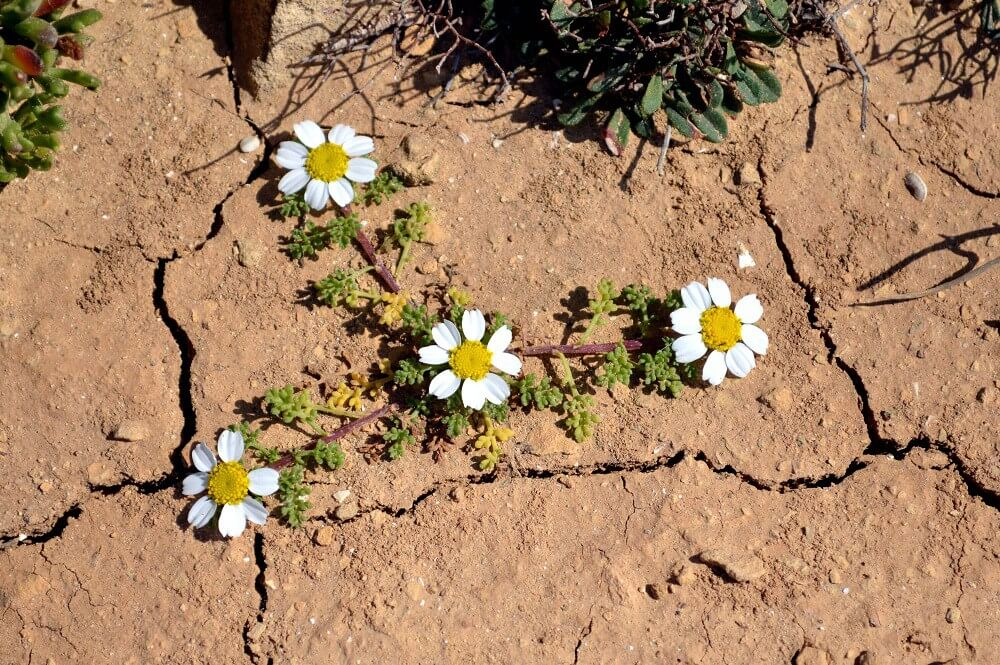 flowers in dry soil