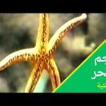 أغنية نجم البحر- اغاني زمان #افتح_يا_سمسم  – Iftah Ya Simsim