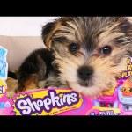 SHOPKINS Season 4 with ZUMI 2016 Surprise Shopkin Baskets – DCTC Puppy