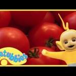 Teletubbies Full Episode – Making Salad | Teletubbies English Episodes