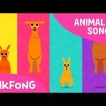 Looby Loo Kangaroo | Kangaroo | Animal Songs | Pinkfong Songs for Children