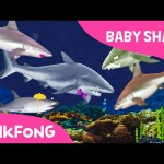 I'm a Real Baby Shark ! | Animal Songs | PINKFONG Songs for Children
