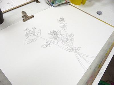 オシロイバナを写生しています。