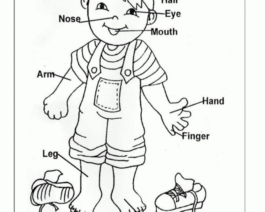 Preschool Worksheets On Body Parts