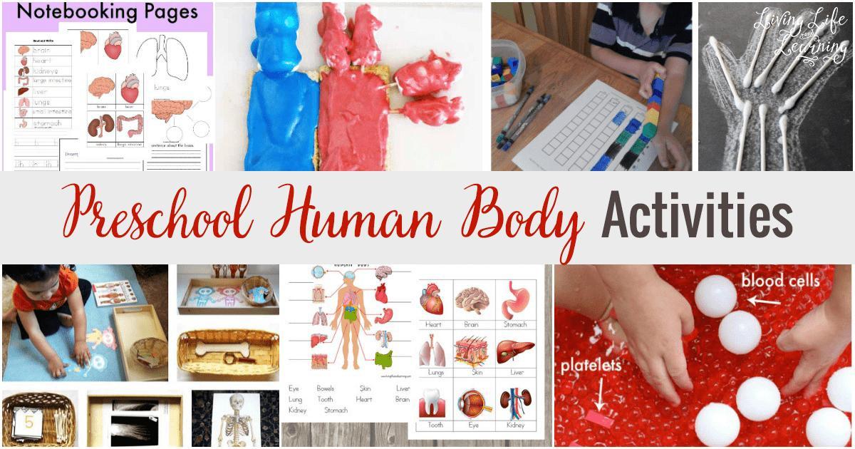 My Body Theme Worksheets For Preschool