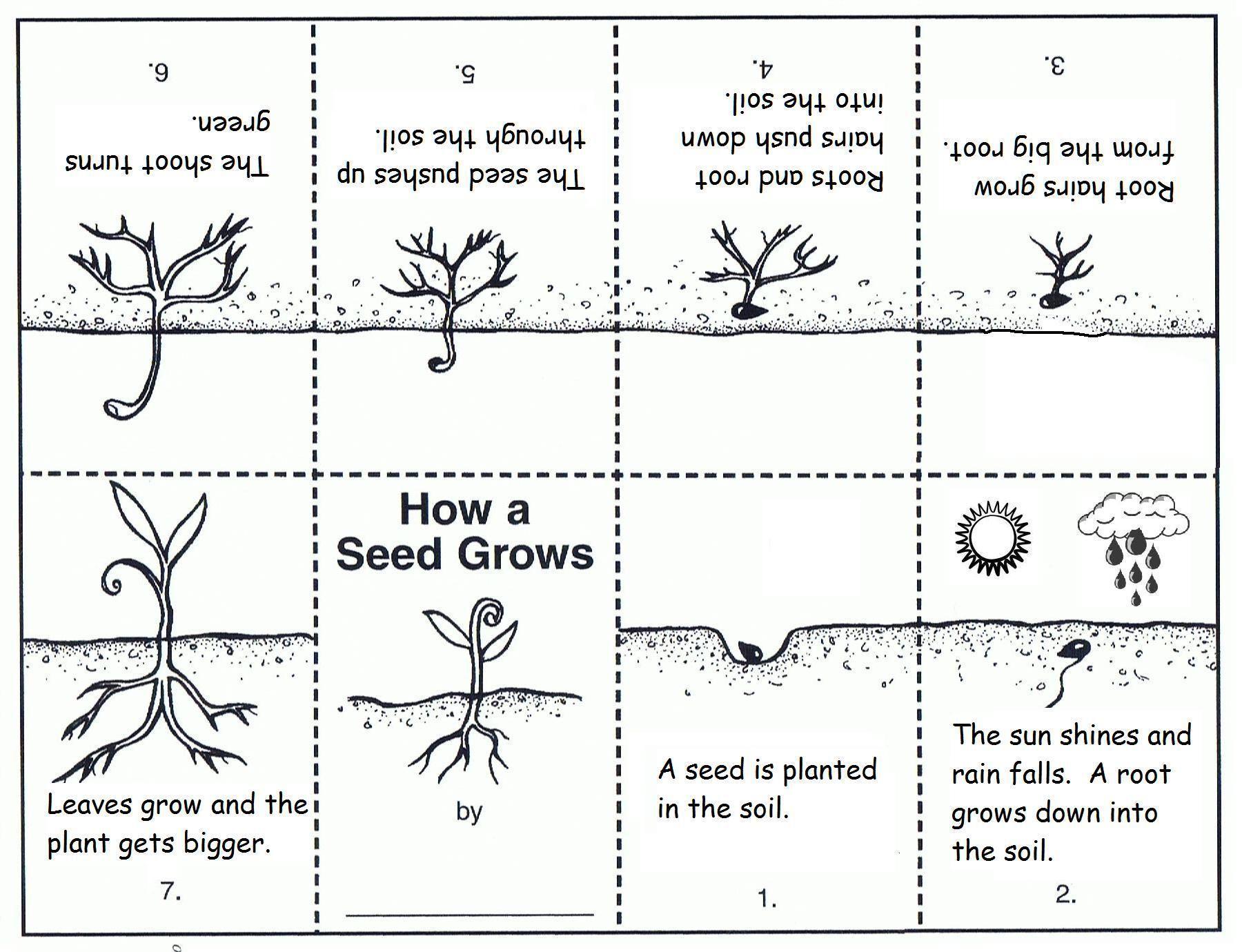 Preschool Worksheets On Plants 3