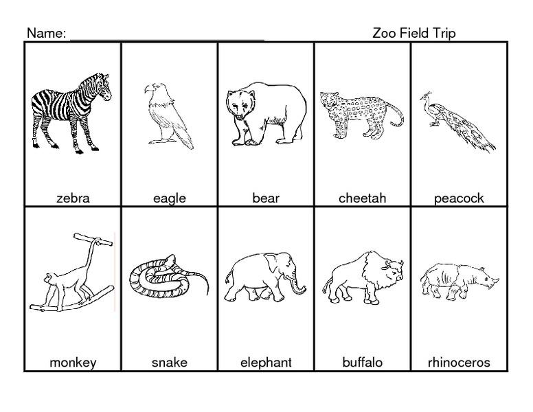 Zoo Activity Worksheets
