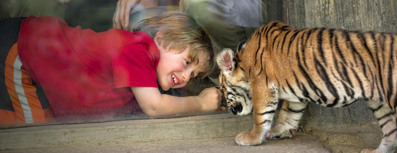 Animals San Diego Zoo Kids