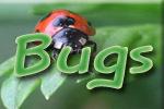 Bugs Theme