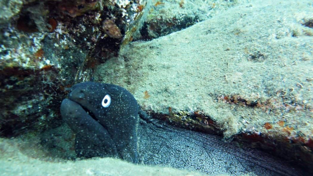 Podwodna Fuerteventura