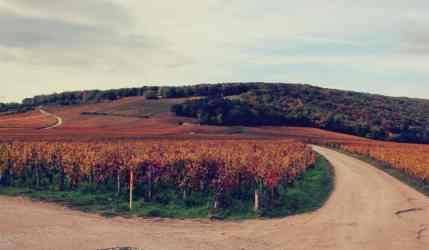 Winnice Burgundii jesienia