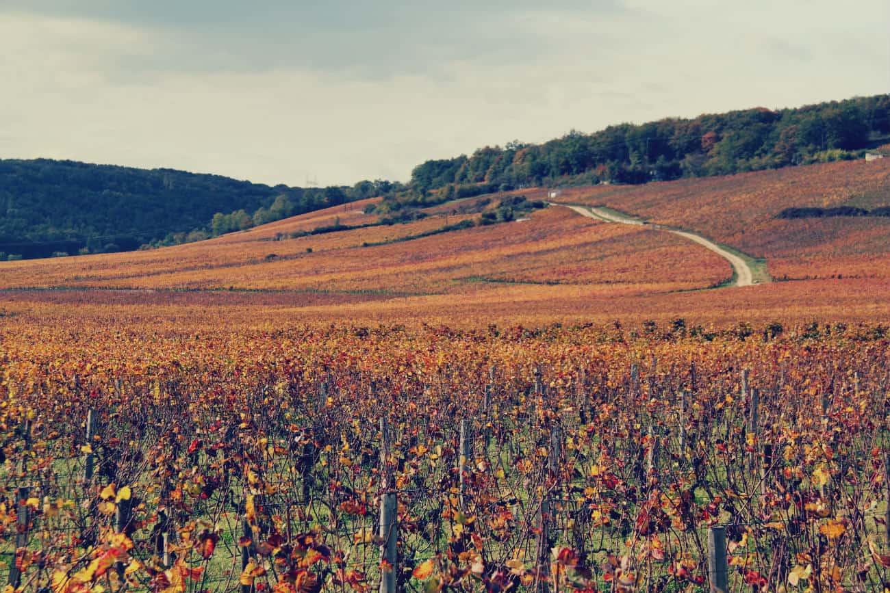 Zwiedzanie Francji - Burgundia