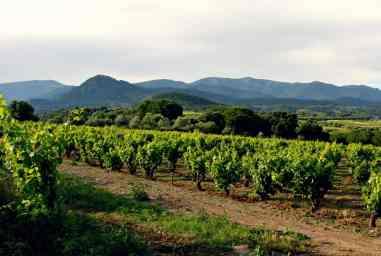 winnice Katalonii