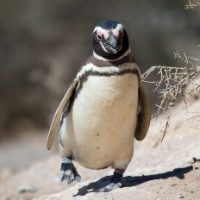 Galapagos Penguin Facts for Kids - Fun Facts & Information