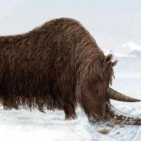 Woolly Rhino Facts for Kids - Interesting Woolly Rhino Facts