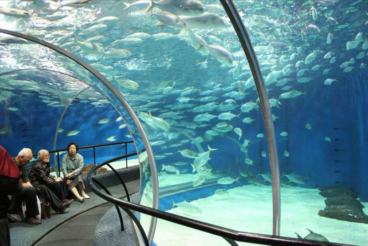 Shanghai Aquarium things to do with kids-Kids Are A Trip