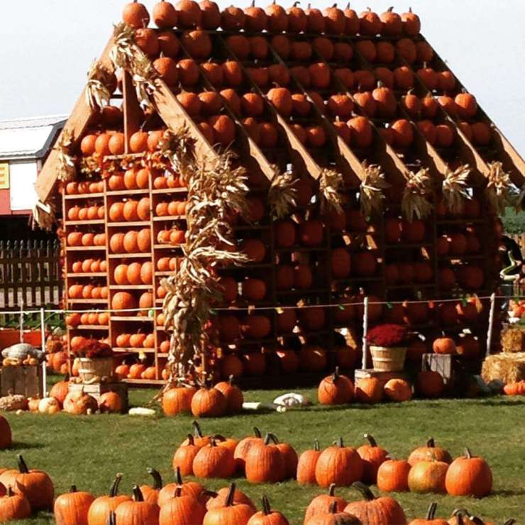 Family Fun Fall Activities in Chicago Pumpkin Farm-Kids Are A Trip