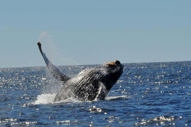 The Best Places to Go in Cabo with Kids Whale Watching-Kids Are A Trip