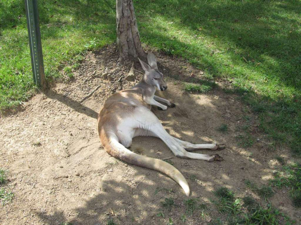 Family Friendly Things to Do in Columbus, Ohio Zoo-Kids Are A Trip