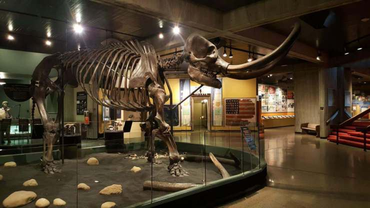 Family Friendly Things to Do in Columbus, Ohio Mastadon-Kids Are A Trip