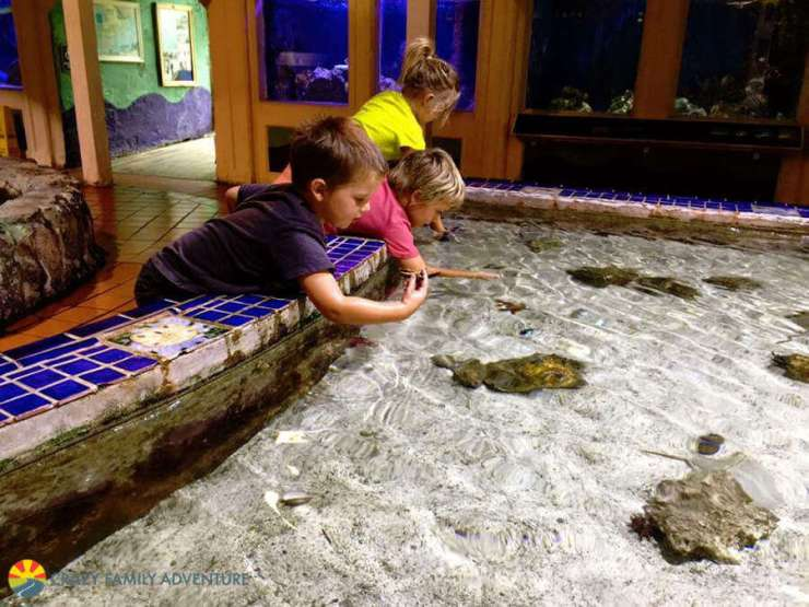 Family Friendly Things To Do in Key West Aquarium-Kids Are A Trip